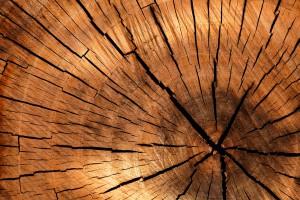 Comment conserver et stocker son bois de chauffage ?