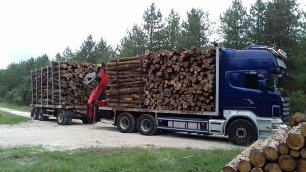 piquets_barrière en bois_bois fins et longs_barrière champs_vendée