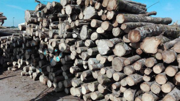 piquets_barrière en bois_bois fin et longs_barrière champs_vendée