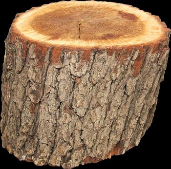bois coupé_rondelle_tronc arbre_jardi'bois_vente bois